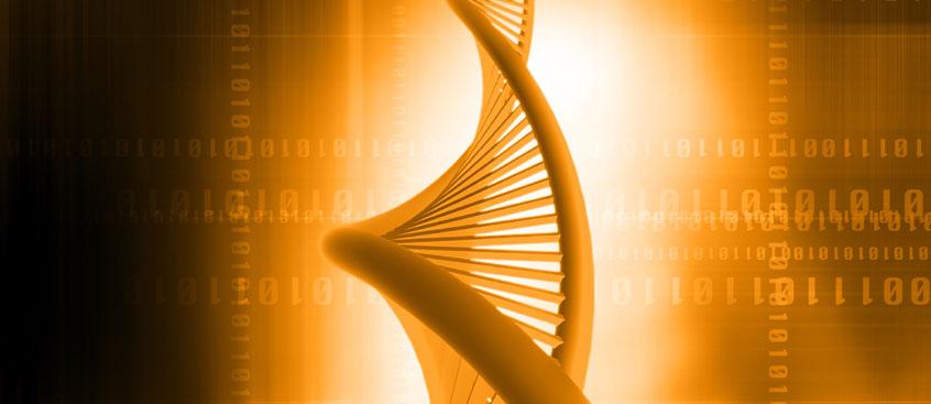 Se identifican siete genes que se expresan durante el proceso de angiogénesis
