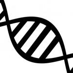 Identificado un gen que predispone un factor de riesgo para la Esclerosis Múltiple