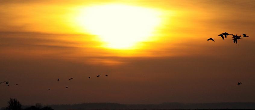 Investigadores determinan que el sol ayuda a prevenir la esclerosis múltiple