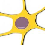 Los daños neuronales de la esclerosis múltiple podrían curarse de forma espontánea