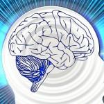 Demuestran que la Esclerosis Múltiple se inicia en las capas externas del cerebro