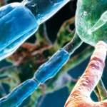 La eficacia y seguridad de BG-12 (dimetilfumarato) en la Esclerosis Múltiple