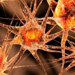 Neurólogos advierten de un aumento de la Esclerosis Múltiple en mujeres jóvenes