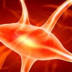 Expertos insisten en la importancia del tratamiento precoz contra la Esclerosis Múltiple