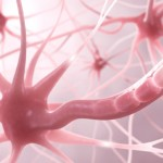 Células Madre Dentales: Tratamiento Aprobado para la Esclerosis Múltiple