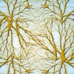 Remielinización de las vainas nerviosas para revertir los efectos de la esclerosis múltiple