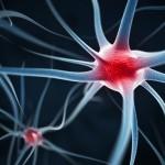 Esclerosis Múltiple: consiguen detener la EM en ratones administrando la proteína Del-1