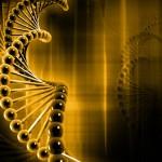 Identifican un gen asociado a un mayor riesgo de sufrir un ictus en los jóvenes