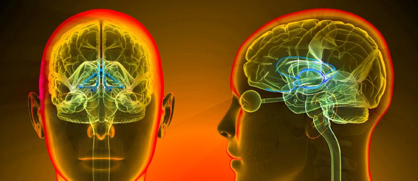 relación entre cerebro y sistema inmune en esclerosis múltiple