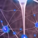 Receptores clave para la remielinización en la Esclerosis Múltiple