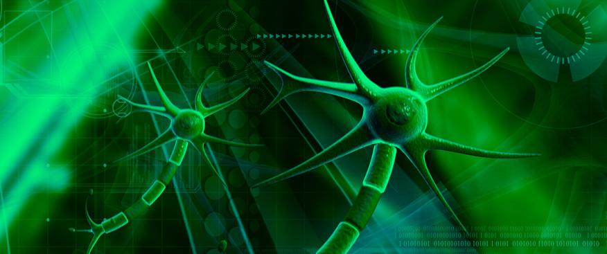 Los reflejos primitivos nos permiten conocer el estado del desarrollo motor del niño